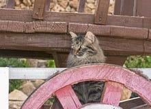 Tabby Cat på ett vagnhjul arkivbild