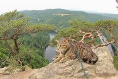 Tabby Cat på Vyhlidka Maj, Czechia Royaltyfri Fotografi