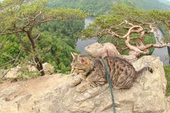 Tabby Cat på Vyhlidka Maj, Czechia Royaltyfri Bild