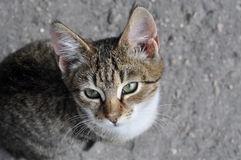 Tabby cat on pavement. Stock Photos
