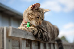 Tabby cat perched on fence Stock Image