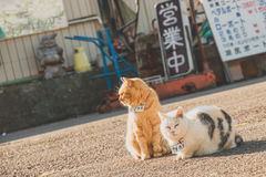 Tabby Cat and Persian Cat on Road during Day Stock Image