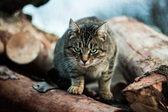 Tabby cat on pile of logs