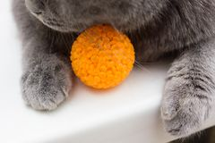 Tabby cat playing with ball. Tabby cat playing with food ball Royalty Free Stock Photo