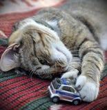 Tabby cat plays Royalty Free Stock Photo