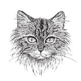 Tabby Cat Portrait. Detailed  from my pen & ink drawing of a tabby cat Royalty Free Stock Photo
