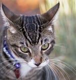 Tabby Cat Portrait auf buntem Hintergrund Stockfoto