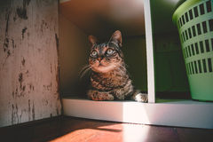 Tabby cat portrait at home Stock Photo