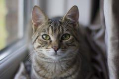 Tabby Cat que se sienta por una ventana Fotos de archivo