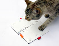 Tabby cat reading notebook Royalty Free Stock Photo