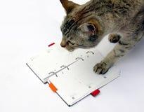 Tabby cat reading notebook royalty free stock photo