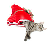 Tabby cat and red bag Royalty Free Stock Photos