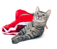 Tabby cat and red bag Stock Photography