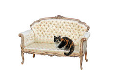 Tabby cat on regency chaise. Photo of a tortoiseshell tabby cat sitting on a regency rococo chaise longue on white background ideal for text etc stock photography