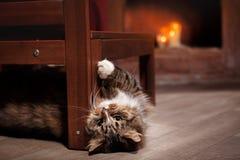 Tabby Cat Relaxing cinzenta e preta Fotos de Stock Royalty Free