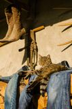 Tabby cat resting. The cat lies outside the house. Cat is a family pet. She rests on the jeans that are dried on a pile of wood. It is a beautiful sunny day stock photos