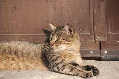 Tabby cat resting Royalty Free Stock Photos
