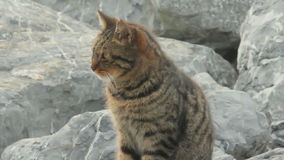 Tabby Cat On Rocks Royalty Free Stock Photos