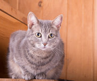Tabby cat on rustic wooden steps Stock Image