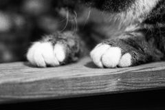 Tabby Cat's Paws On Wood Stock Image