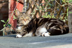 Tabby cat on shed roof Royalty Free Stock Photography