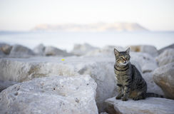 Tabby cat on the shore. Stock Images