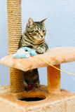 Tabby cat sits on a cat tower Stock Photos