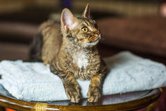 Tabby cat sitting on blue towel looking to the side Royalty Free Stock Photos