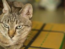 Tabby Cat Sitting on The Box Stock Photos