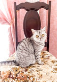 Tabby cat sitting on a chair Stock Images