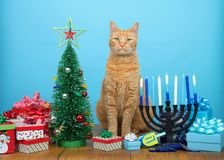 Tabby cat sitting between Christmas and Hanukkah decorations. Adorable orang tabby cat sitting between a Christmas tree and a Hanukkah Menorah, looking at viewer stock image