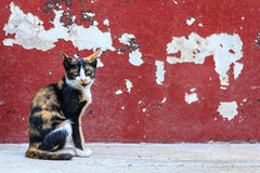 Tabby cat sitting on crack red wall background Royalty Free Stock Photos