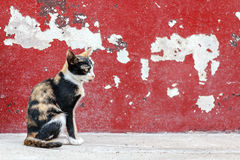 Tabby cat sitting on crack red wall background Royalty Free Stock Images