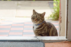 Tabby cat sitting down outside house Stock Photography
