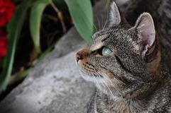 Tabby cat sitting in the garden Royalty Free Stock Photography
