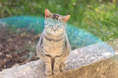 Tabby Cat. Sitting in the garden, with interesting blue lens flare. Selective focus stock photography