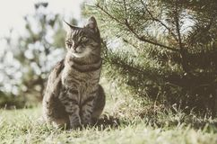 Tabby cat sitting in the garden by the tree. Cat is a pet, the family loves her. She is beautiful, happy and calm. The garden belongs to the house where it royalty free stock photos