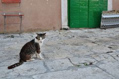 Tabby cat sitting on the ground. Korcula, Croatia Royalty Free Stock Photos