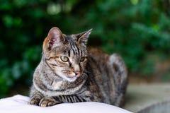 Tabby cat lying on a cushion. A tabby cat sitting neatly on a cushion in a garden stock image
