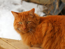 Tabby Cat Sitting Outside Stockfoto
