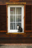 Tabby Cat Sitting At The Outside Of The Window Stock Image