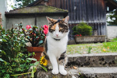 Tabby cat sitting in a park steps Stock Photography