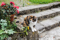 Tabby cat sitting in a park steps Royalty Free Stock Photography