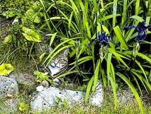 Tabby Cat Sitting sob as folhas ilustração do vetor