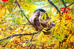 Tabby cat sitting on the tree. And hiding behind leaves stock photography