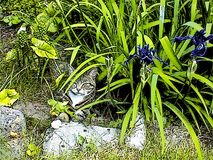 Tabby Cat Sitting under Leaves. A cute cat sitting in the shade on a stone under Iris flowers and other foliage vector illustration