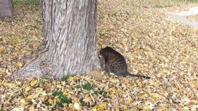 Tabby Cat Sitting Under Tree stock video
