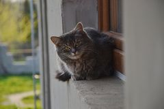Tabby cat sitting on the window of the house Stock Photo