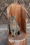 Tabby cat sitting on wooden seat royalty free stock images