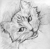 Tabby cat sketch Royalty Free Stock Image
